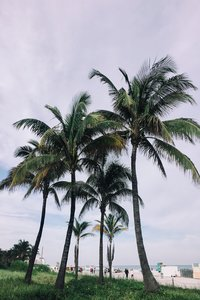 enjoy-the-palms-in-florida-where-dental-implant-solutionz-in-largo-brings-affordable-dental-implant-and-lanap-treatment-so-that-you-can-stop-going-overseas-for-work